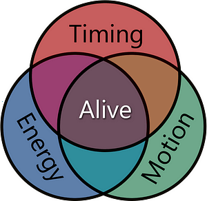 Aliveness diagram. Aliveness is made up of the three parts Timing, Energy and Motion. You need all three in training to fight successfully.